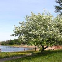 Весна... :: Дина Нестерова
