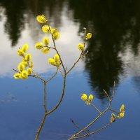 Вот и весна пришла :: Валерий Талашов