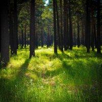 Лесные тропинки :: Марина Кириллова