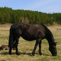 black horse :: Сергей Шаврин