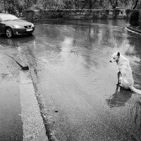 Жизнь собачья #1 :: Николай Сульженко