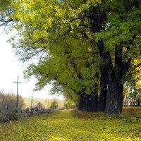 Осень. :: Нина