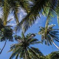 и пальмы рвутся в небо... :: Александр