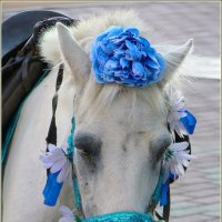Портрет пони в праздничном наряде. :: Роланд Дубровский