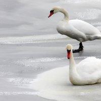 на замерзшем пруду :: виктор омельчук