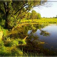 Заброшенное озеро :: Alla Kachuro