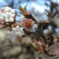 Весна :: Марина Солодова