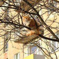 Высоко сижу, далеко гляжу... :: Людмила Жданова