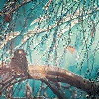 Весна пришла :: Александра Гаранькина