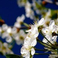 Весна пришла! :: Сергей