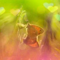 Love :: Иван Сагиров