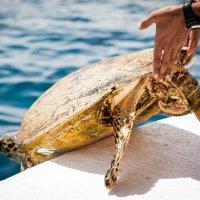 Черепаха :: SteFFun Glenton