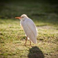 Bird :: SteFFun Glenton