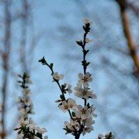 Весна :: Руслан Веселов