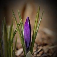 копье весны :: gribushko грибушко Николай