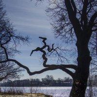 дерево :: ник. петрович земцов