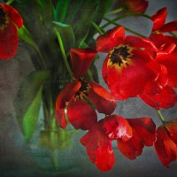 Весенний подарок.. :: Ирина Лядова