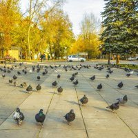 Городские голуби :: юрий Амосов