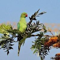 А из нашего окошка,попугаев лишь немножко :: Рома Лидовский