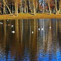 Чайки в пруду. :: Александр Лейкум