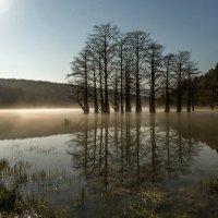 лесное озеро в лунном свете :: Алексей Яковлев