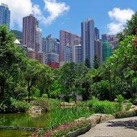 Гонконг.Полдень. :: Михаил Рогожин