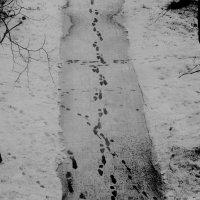 Зимний пейзаж :: Виктория