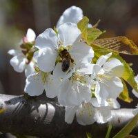 Пчелкаа :: Надежда Лунева