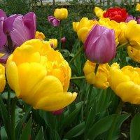 Весна! :: Larisa Gavlovskaya