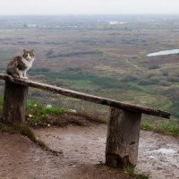 Кот в пейзаже... :: Александр Никитинский