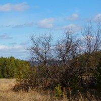 Весенний пейзаж №7877 :: Сергей Шаврин