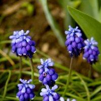 Весна. :: Николай Сидаш