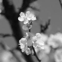 весна в разгаре :: Юрий Гайворонский