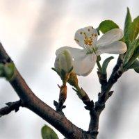 Природа :: Dasha Darsi