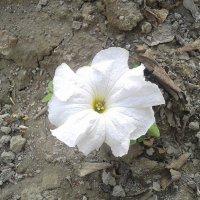цветок :: Зарина Азадова