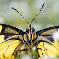 Я | Бабочка :: Иван Сагиров