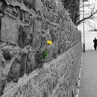 Flower :: SvetlanaScott .