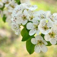 Весна пришла :: Roman V