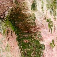 Обнажения пород около входа в пещеру Трёхглазка :: Светлана Ляшко