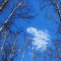 облако запутавшееся  в ветвях :: Александр Шурпаков