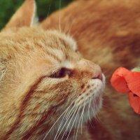 Кот с маком :: Alina Bondar