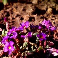 Первые цветы :: Натали V