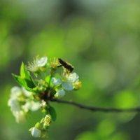весна! :: Александр Кот