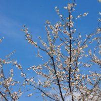 Сад - огород 1 :: _NIGREDO_ _