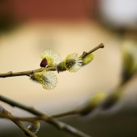 Весна :: Artem72 Ilin