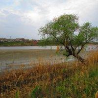 Рассвет на реке :: Marina Timoveewa