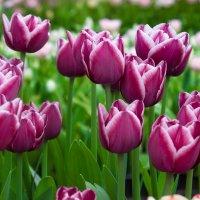 цветочная выставка :: Даниил Ткаченко