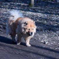 собака :: Эмиль Багдалов
