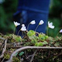 Весна :: Александр Макаревич