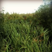 Травушка - муравушка зелёненькая. :: Ольга Кривых